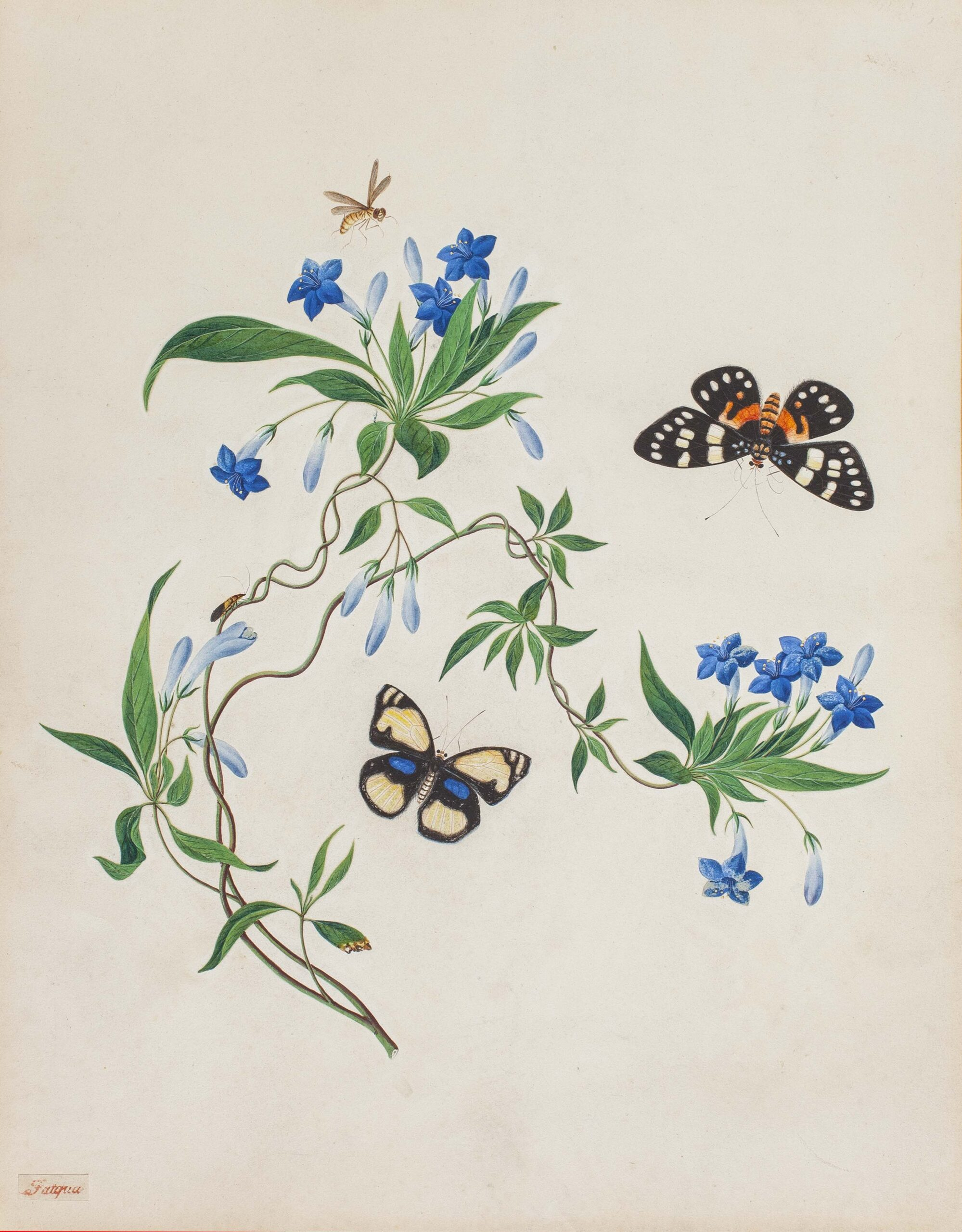 Fatqua, early 19th century A pair of paintings of Chinese gentians and other flowers accompanied by butterflies and a dragon fly Gouache, each 16 x 12 in (40.7 x 30.5 cm)